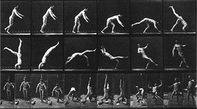 Muybridge Gallery